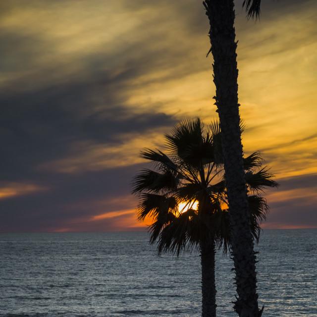 """Sunset through a palm"" stock image"