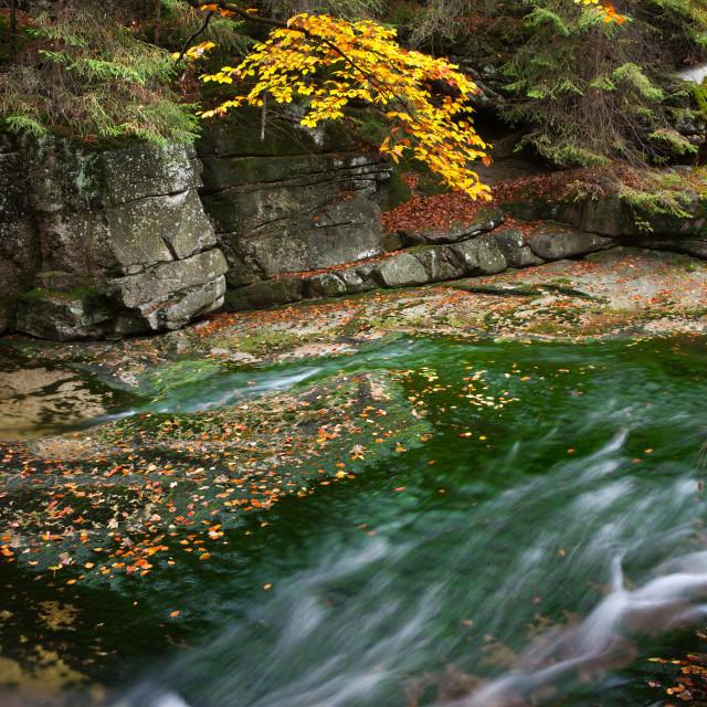 """Stream in Autumn Scenery"" stock image"