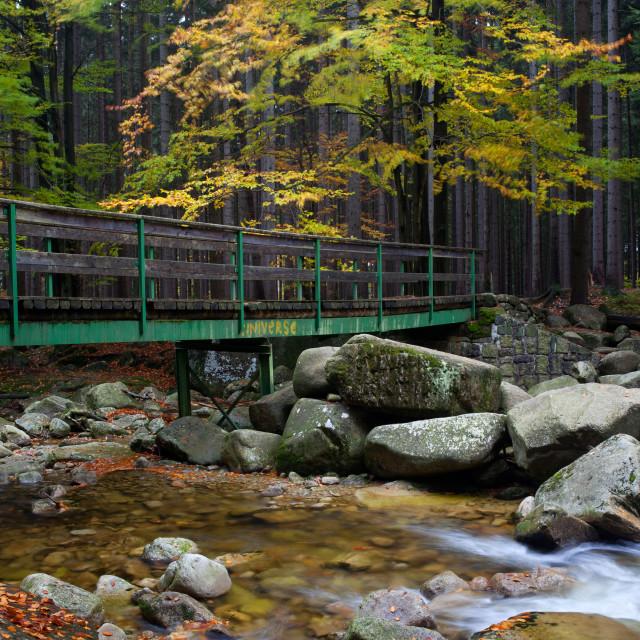 """Bridge Across Stream in Autumn Forest"" stock image"