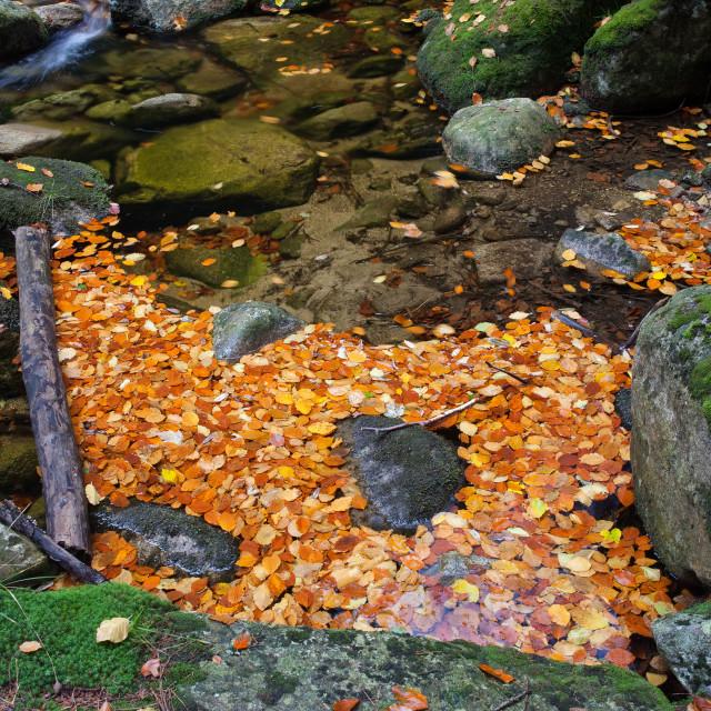 """Autumn Leaves on Stream"" stock image"