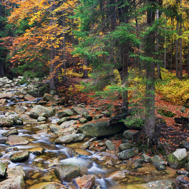 """Stream in Autumn Mountain Forest"" stock image"