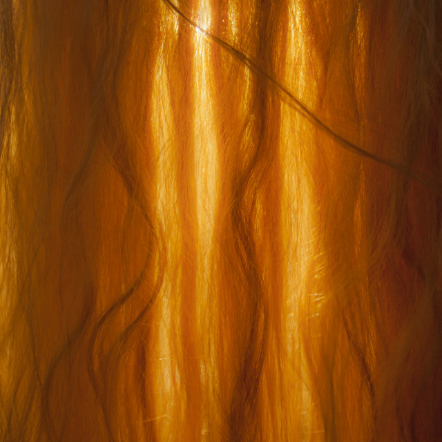 """Golden Curls"" stock image"
