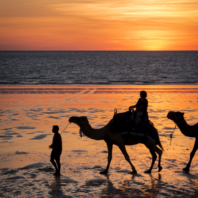 """Camels on Cable Beach, Broome"" stock image"