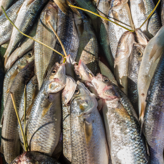 """""""Bunches of a variety of fresh fish at a fish market. Cape Town, South Africa."""" stock image"""