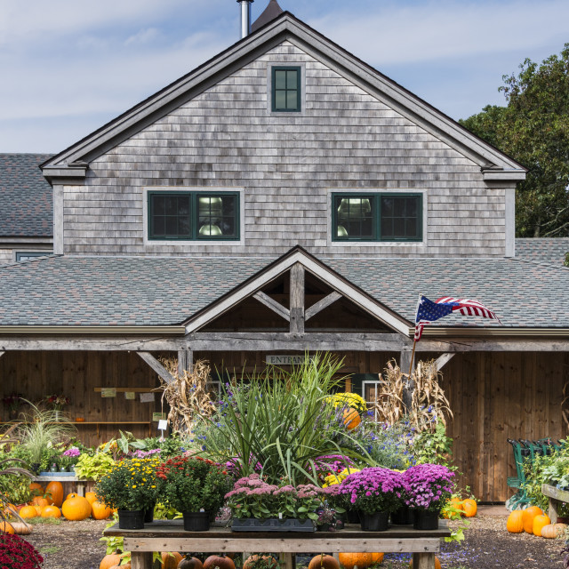 """Autumn display, Morning Glory Farm stand, Martha's Vineyard"" stock image"