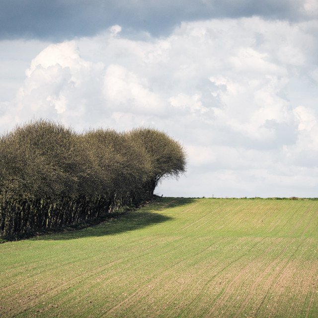 """Trees on a row on a field"" stock image"