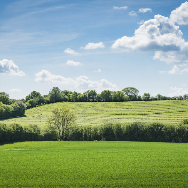 """Rural green fields in the spring"" stock image"