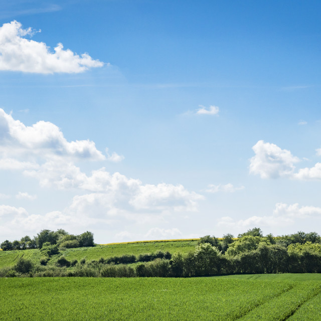 """Green fields in rural environment in the spring"" stock image"