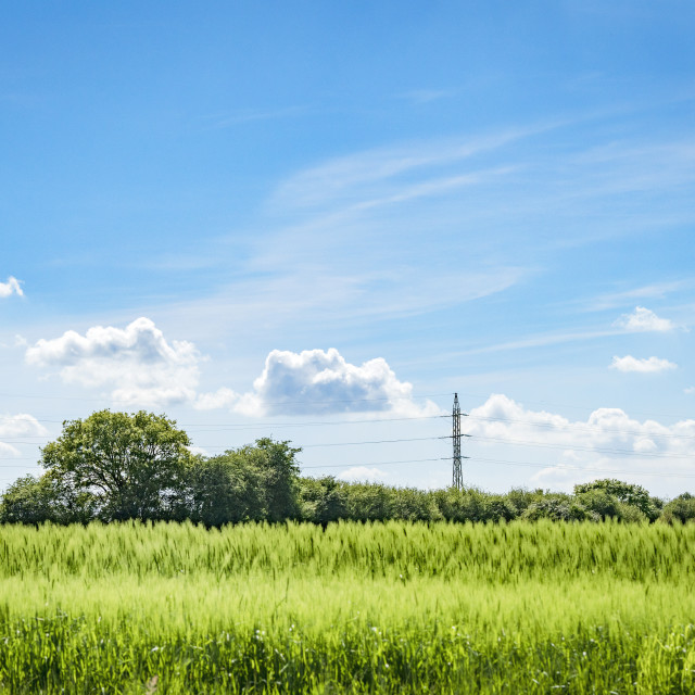 """Pylons on a green field with crops"" stock image"