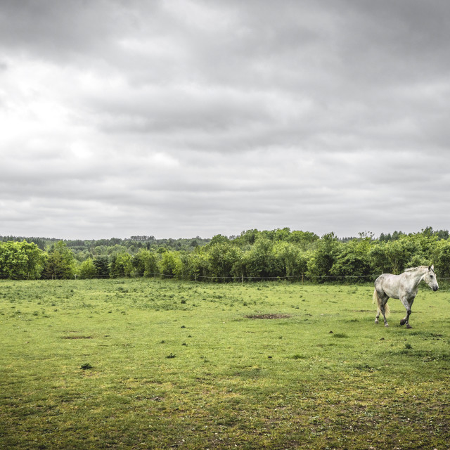 """White horse on a rural field with a fence"" stock image"