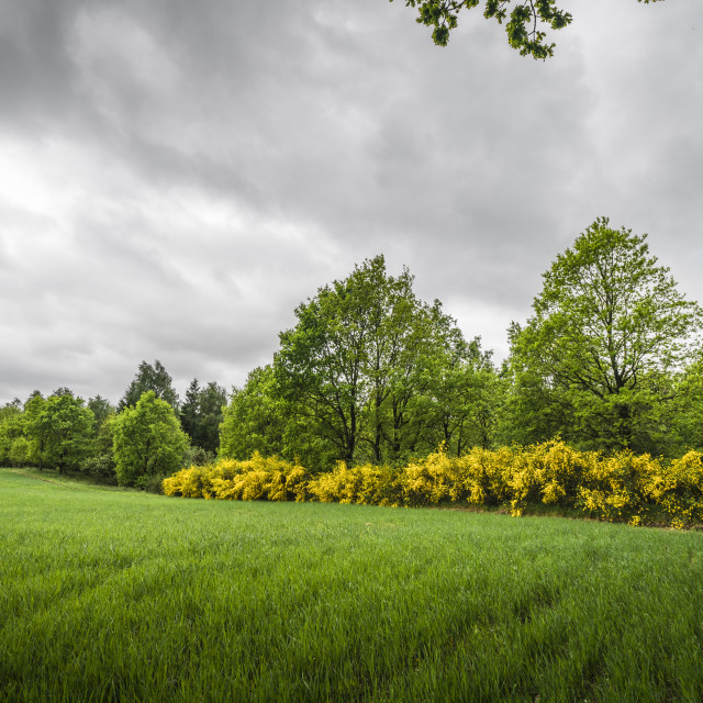 """Cloudy weather over a rural field with broom"" stock image"