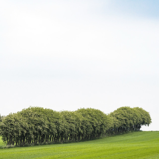 """Crops on a field with trees on a row"" stock image"