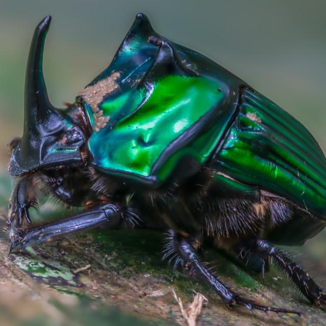 """Amazon Jungle Insect"" stock image"