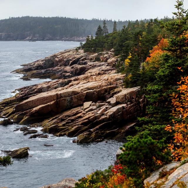 """Rocky coastline with foliage colors"" stock image"
