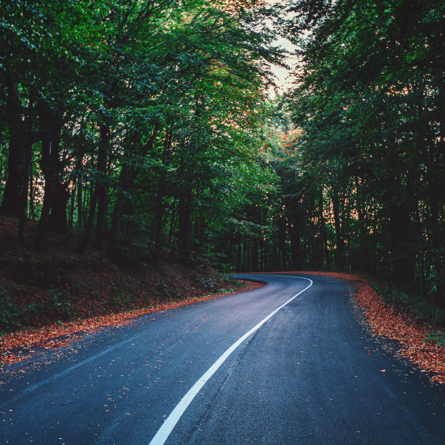 """Forest road on a autumn day"" stock image"