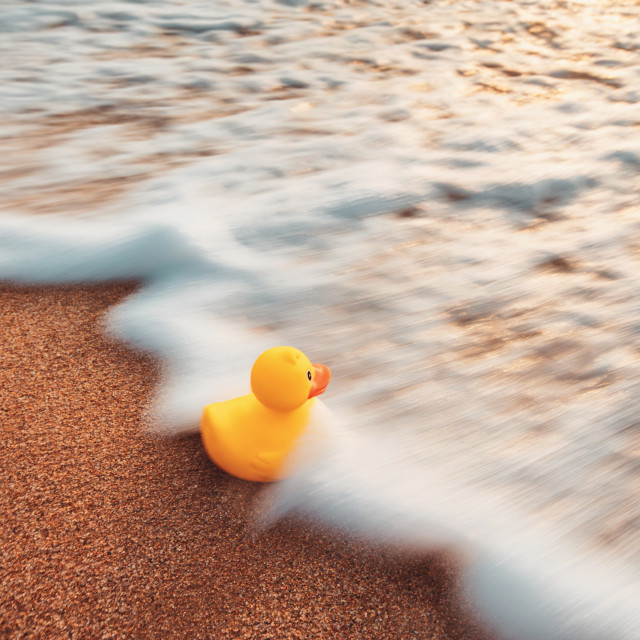 """Yellow rubber duck toy floating in water. Sunrise on the beach."" stock image"