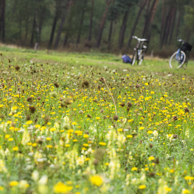 """Two bicycles in a flower field"" stock image"