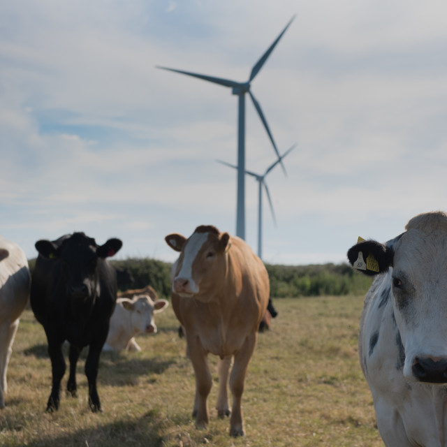 """""""Wind and cattle farm"""" stock image"""