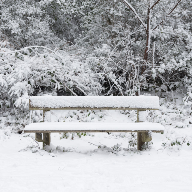 """""""A bench in the forest in the snow"""" stock image"""