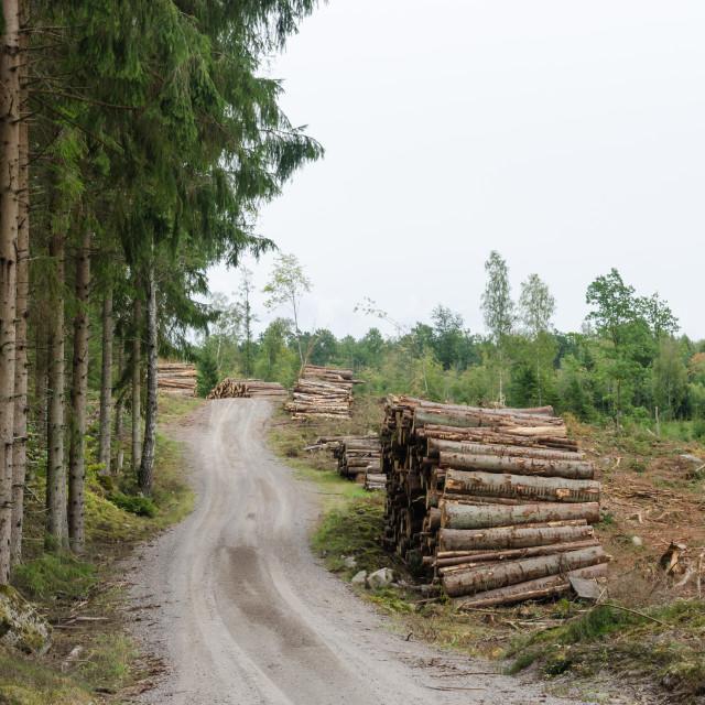 """Log-piles by a gravel roadside"" stock image"