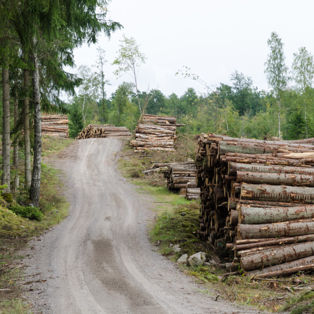 """""""Woodpiles by a gravel road side"""" stock image"""