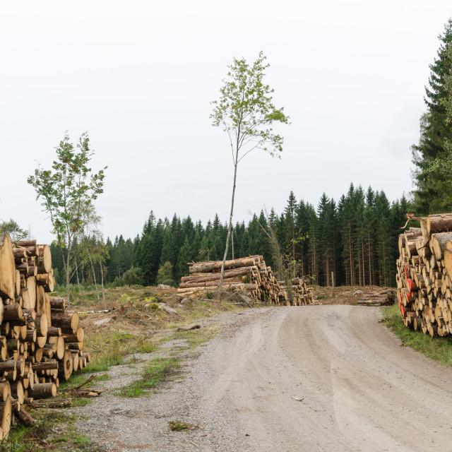 """Log stacks by roadside"" stock image"