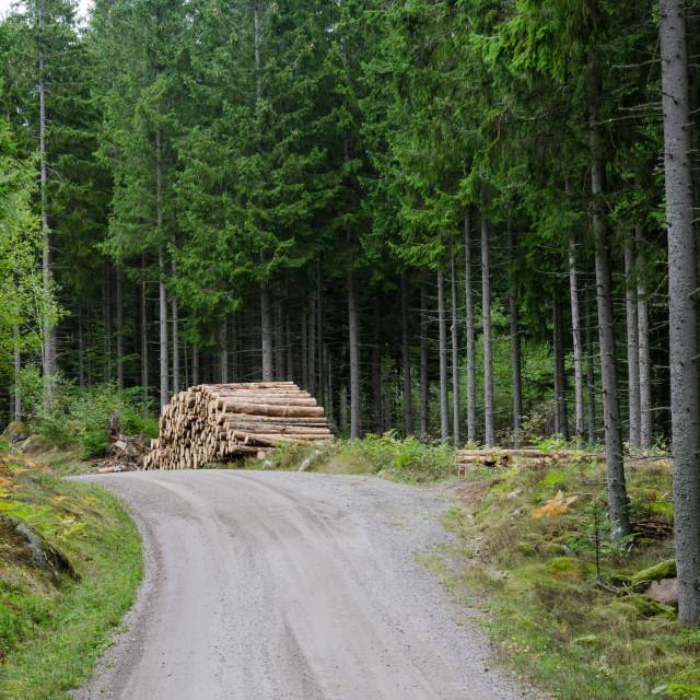 """Wood pile by gravel roadside"" stock image"