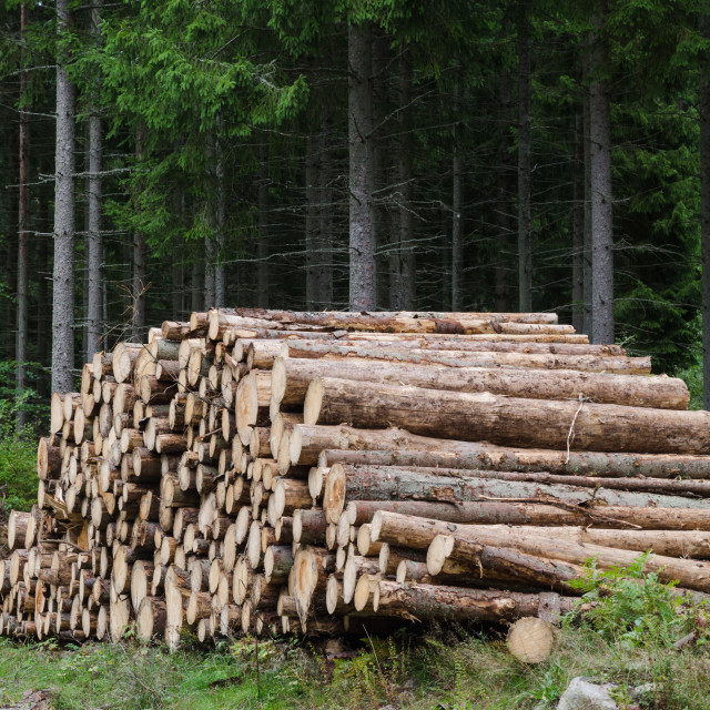 """""""Logs in a woodpile"""" stock image"""