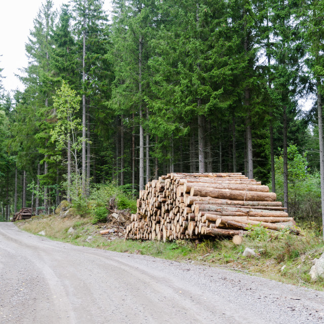 """""""Woodpile by roadside in a coniferous forest"""" stock image"""