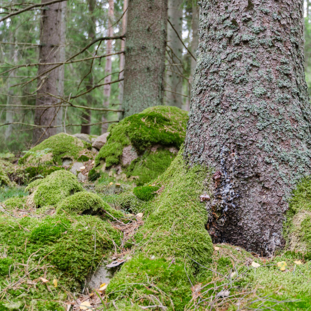 """""""Green mossy forest floor"""" stock image"""