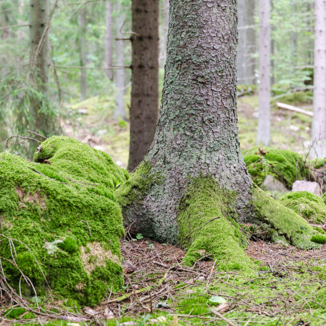 """""""Moss covered forest ground"""" stock image"""