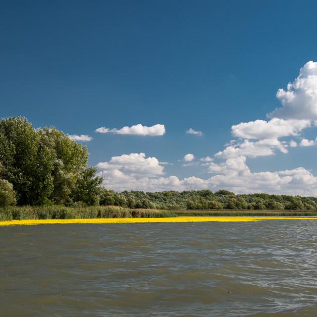 """Tisza lake"" stock image"