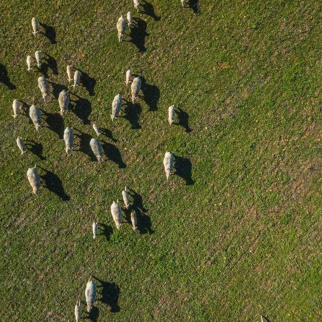 """Farm Animals"" stock image"