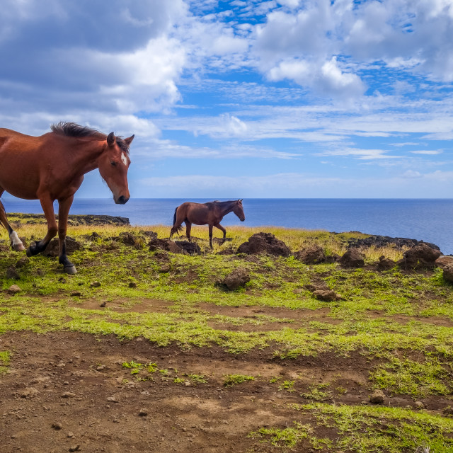 """""""Horses on easter island cliffs"""" stock image"""