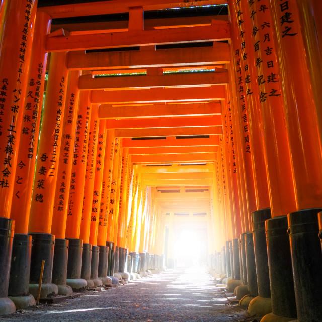 """Fushimi Inari Taisha torii, Kyoto, Japan"" stock image"
