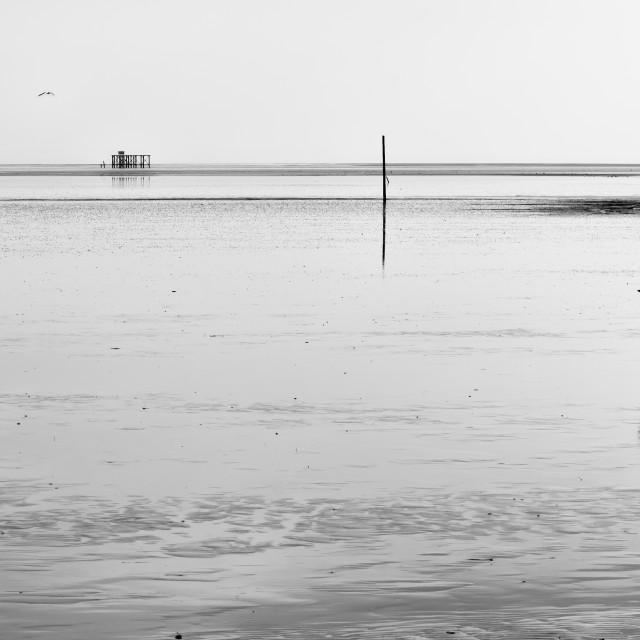 """Reflected Dog at Sandy Hills Beach"" stock image"