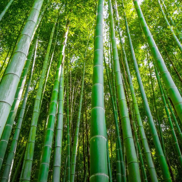 """""""Arashiyama bamboo forest, Kyoto, Japan"""" stock image"""