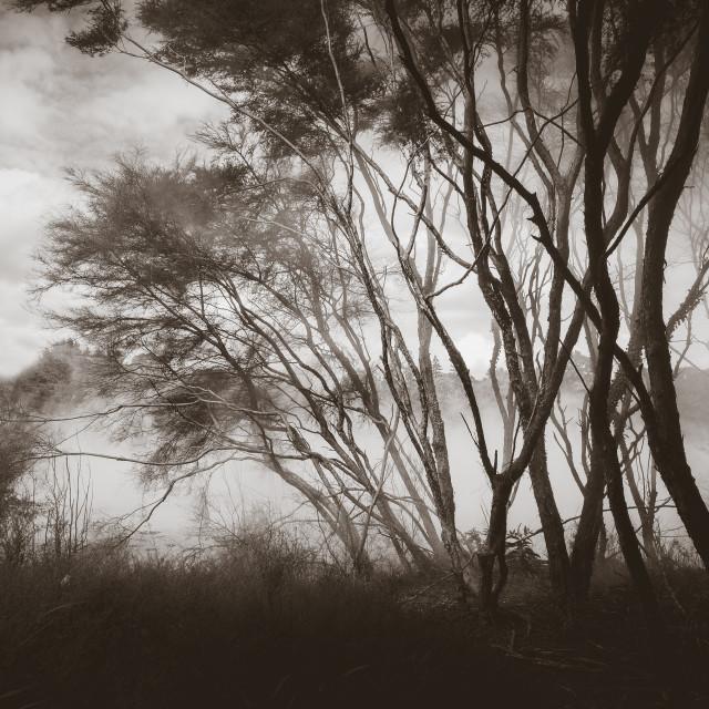 """Misty lake and forest in Rotorua, New Zealand"" stock image"