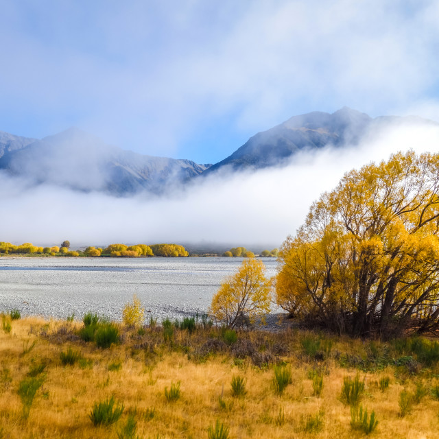 """""""Yellow forest and river in New Zealand mountains"""" stock image"""