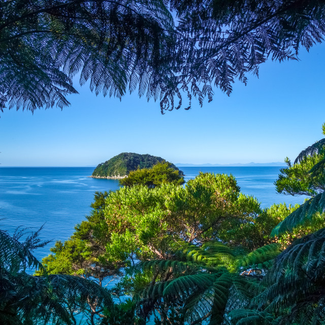 """""""Track view in Abel Tasman National Park, New Zealand"""" stock image"""