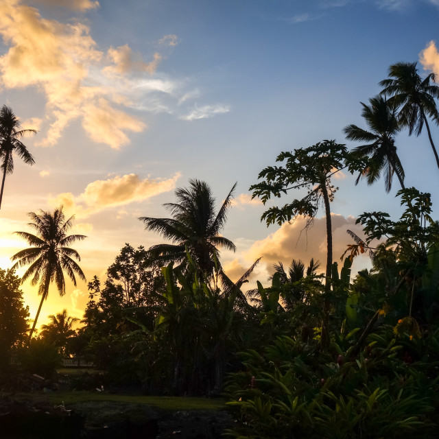"""""""Palm tree at sunset in Moorea island"""" stock image"""