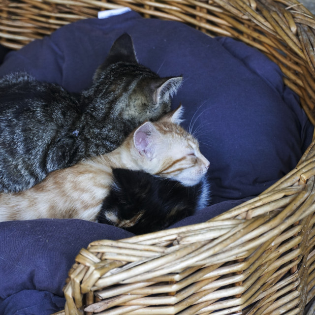 """""""Kittens are sleeping together in basket"""" stock image"""