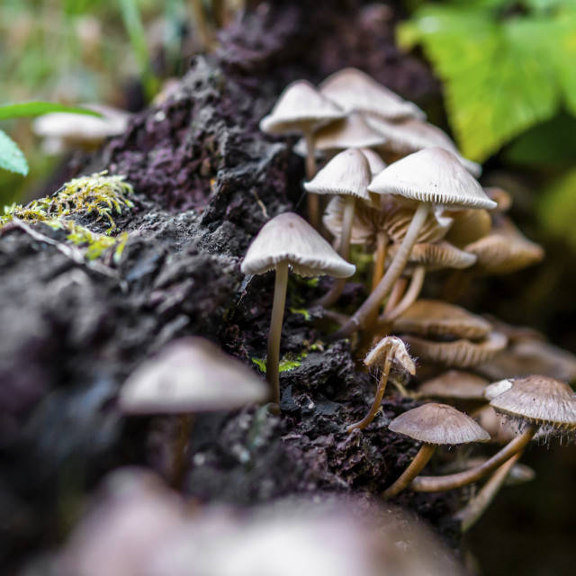 """""""Fungi at Calderwood"""" stock image"""