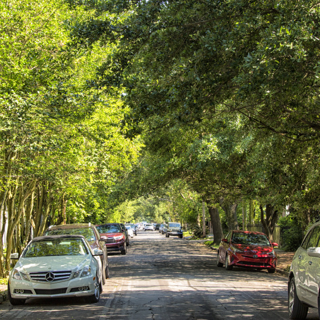 """""""Tree lined street in New Orleans"""" stock image"""