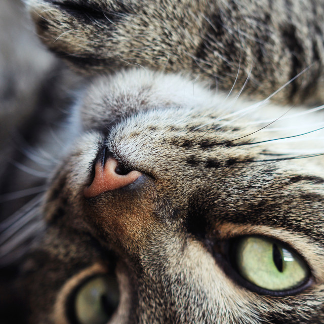 """Cute Tabby Cat #5"" stock image"