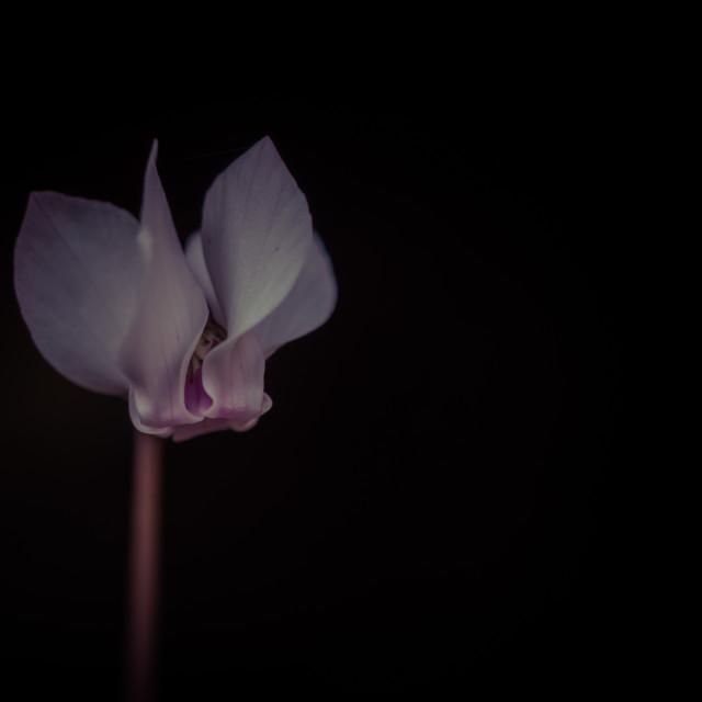 """Single Flower"" stock image"