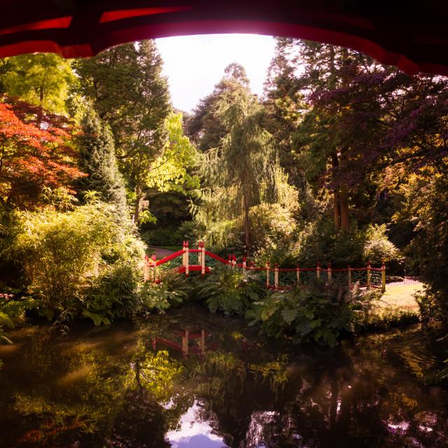 """Biddulph Grange Garden Panorama"" stock image"