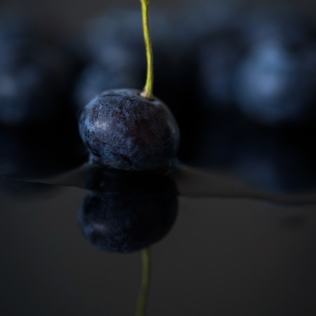 """""""Soft fruits, blueberry isolated"""" stock image"""