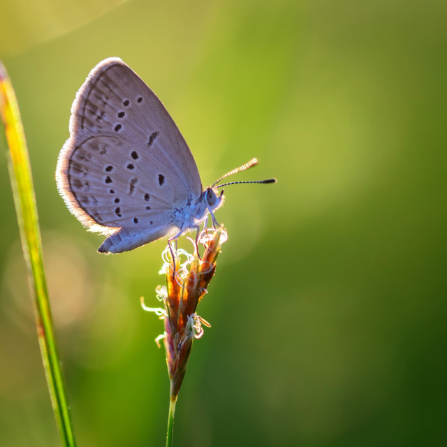 """Close-up to butterfly on grass in morning light"" stock image"