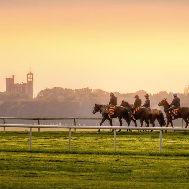 """""""Horses on the Curragh"""" stock image"""